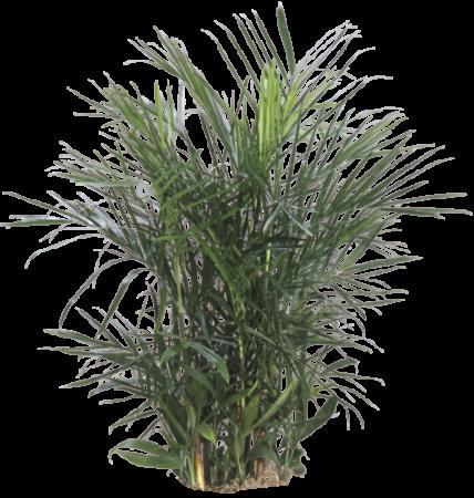 Plants The Plant Lady